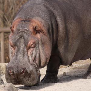 Reasons to Visit Al Ain | Zoo