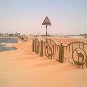 Moving to the UAE | Desert